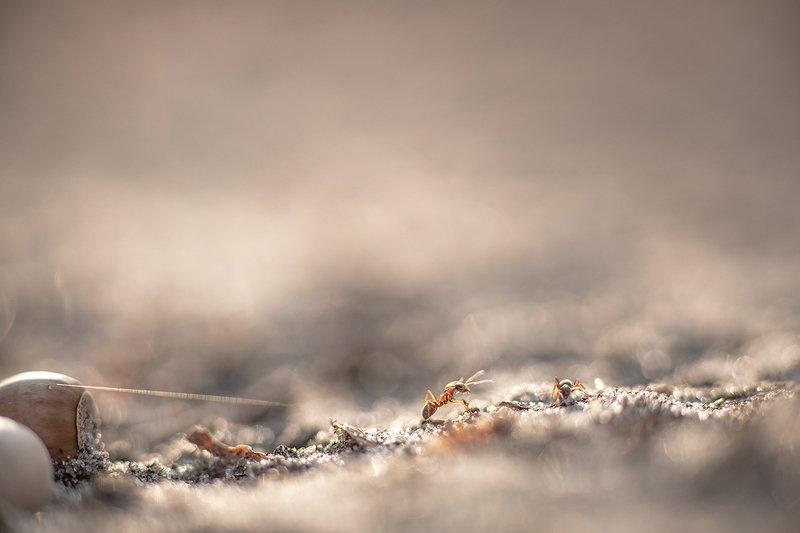 муравей, макро, сюжет, свет, цвет, октябрь, осень, привет, сосед, воронеж, геннадий мещеряков, Привет сосед!photo preview