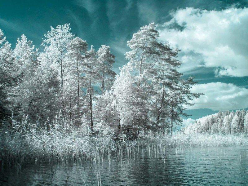 ладога, ладожское озеро, озеро, деревья, лето, карелия, инфракрасная фотография, ir Еще инфракрасная Ладогаphoto preview