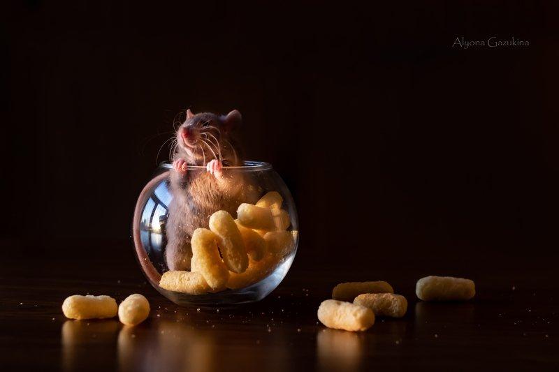 крыса, животные, анималистика Довольная морда... :)photo preview