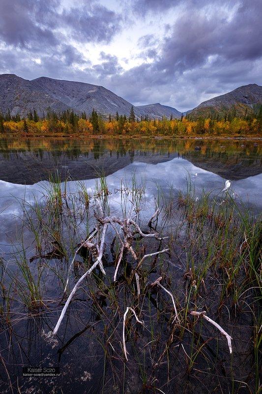 хибины, полярный круг, плавник, отражение, озеро, горы, золотая осень photo preview