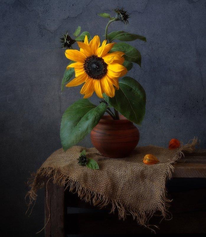 натюрморт,цветы,подсолнух,осень ...photo preview