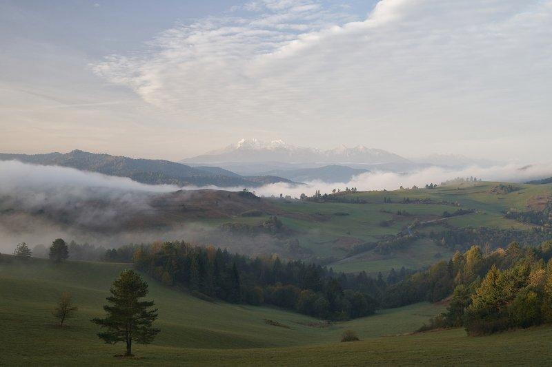 mist,mountains,sunrise,tree,pieniny,tatry Pieninyphoto preview