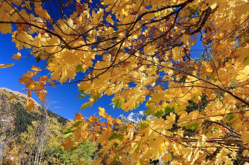 домбай, домбайульген, осень, горы, кчр, photo preview