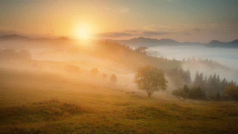 #карпаты, #дземброня, #утро,#туман, #осень, #гора, #село Утро в Дземброне.Карпаты.photo preview