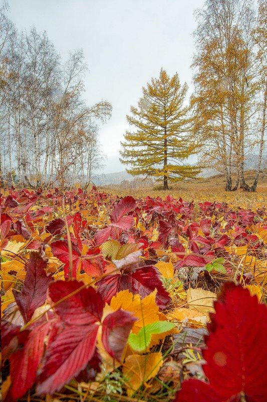 южный урал,оренбургская область, орск, новотроицк,башкирия, башкертостан Земляничный Ковёр!photo preview