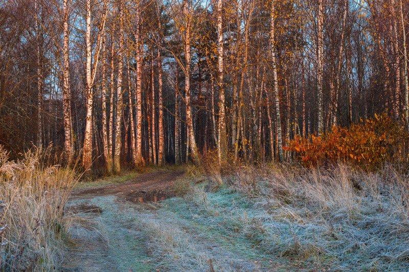 утро рассвет иней мороз лес осень РОзовый рассвет морозным утромphoto preview