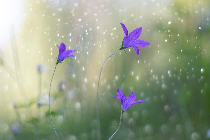 no people, flower, nature, day, close-up, petal, flower head, beauty in nature, blossom, purple, selective focus, Valsa de Verãophoto preview