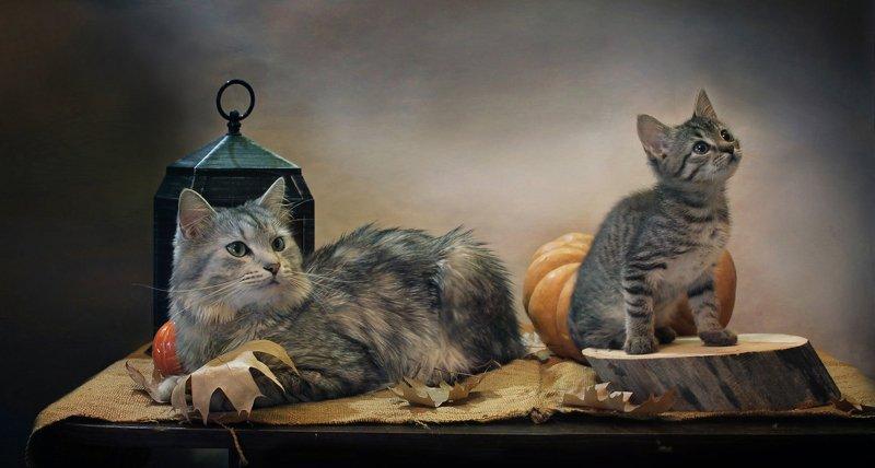 композиция, животные, кошки, кот, котенок, тыква, фонарик, камелек, осень Про котиков и тыквыphoto preview