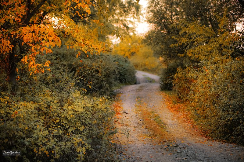 nature, landscape, yellow, red, leaves, leaf, road, travel, photography Autumn notes..photo preview