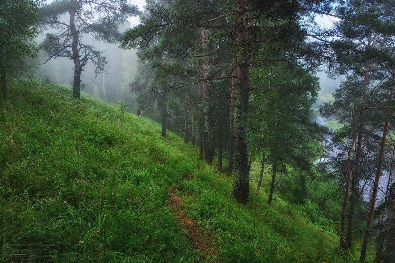 туман, лес В стране тумановphoto preview