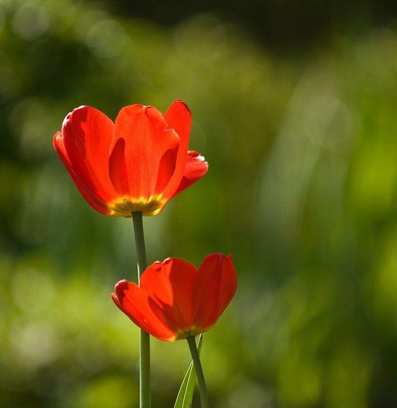 Весна.photo preview