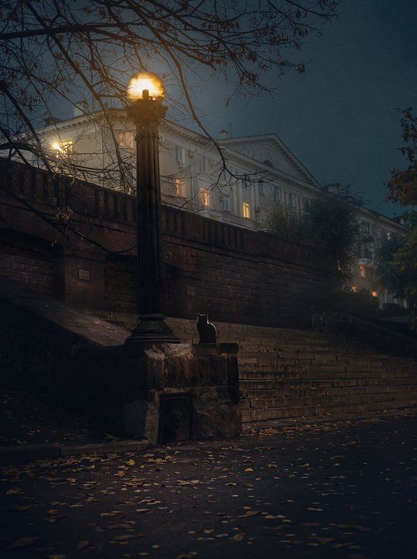 город, архитектура, ночь, улица Кот бегемотphoto preview