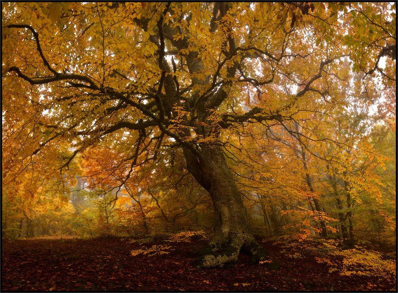 Осень в Крыму 2photo preview