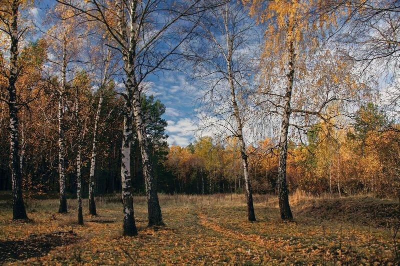 Осенние березки фото превью