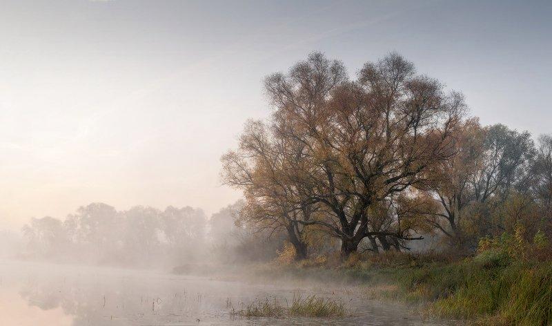 природа утро туман деревья Утро на озереphoto preview