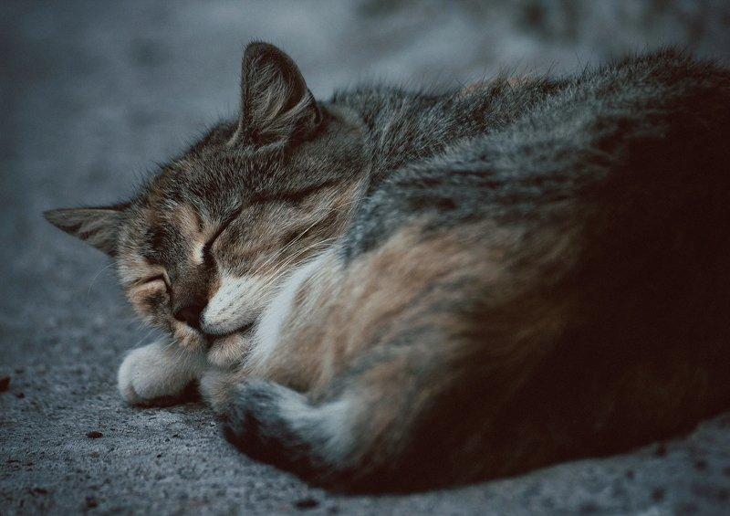 кот, коты, котэ, кошка, кошки, сон sleeping catphoto preview