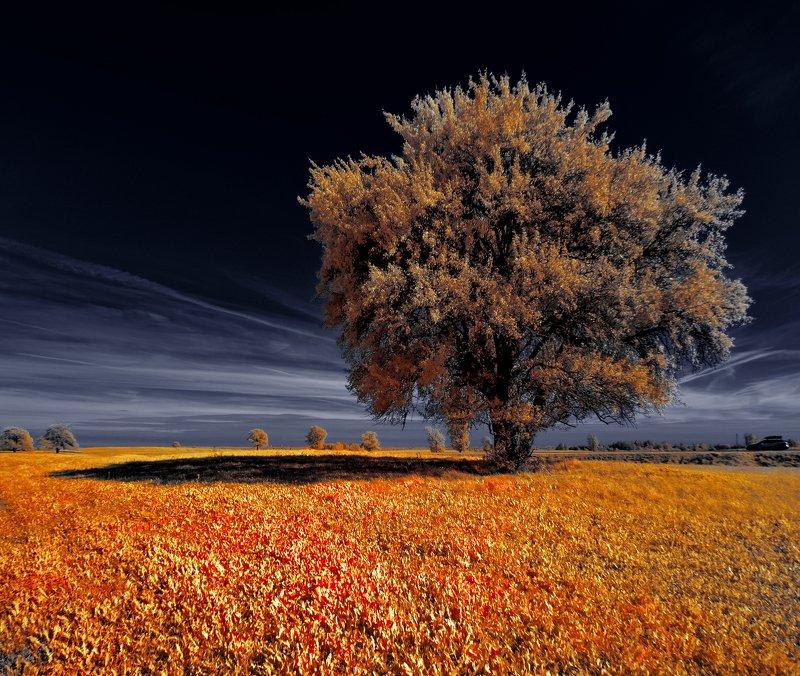 infrared,ик-фото,инфракрасное фото, инфракрасная фотография, пейзаж, осень Есть у осени теплые тени.photo preview