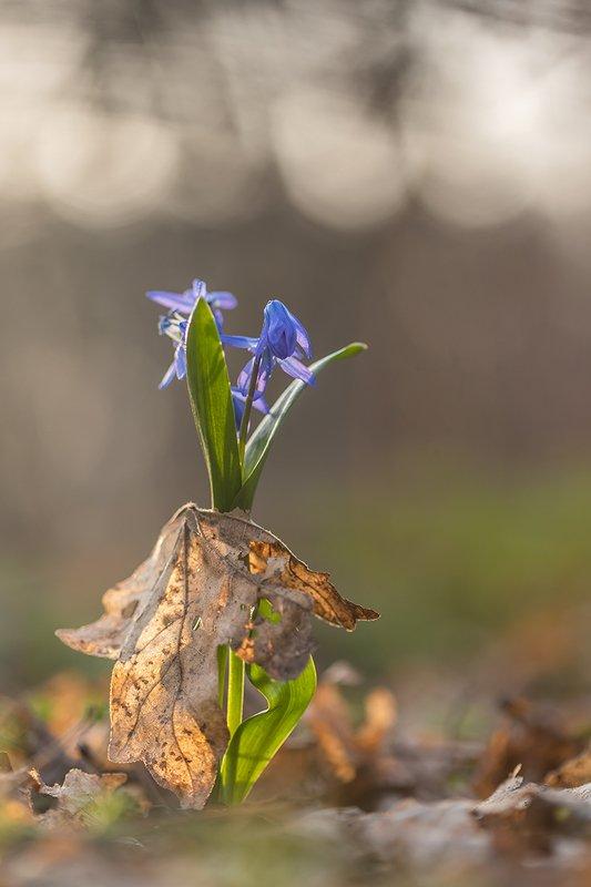 Победа весныphoto preview