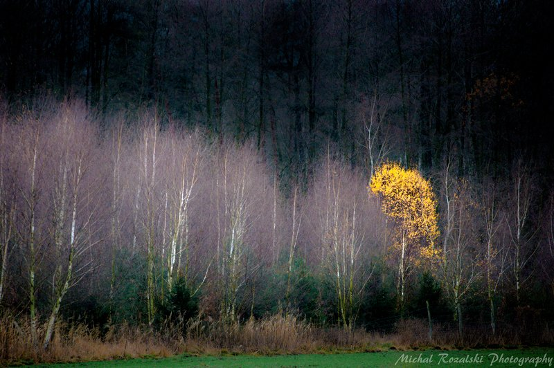 trees, ,autumn, ,season, ,yellow, ,colors, ,nature, ,landscape, , Proteusphoto preview