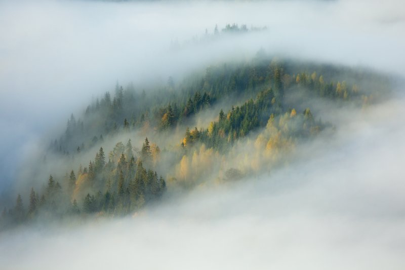 #Карпаты,#горы,#рассвет,#облака,#туман,#Украина,#лес Выше облаковphoto preview