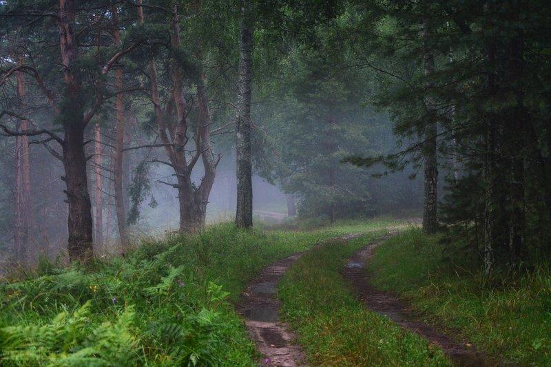 лес, туман В стране туманов-2photo preview