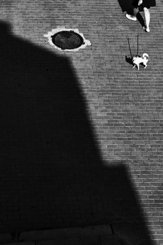 bnw, black and white, monochrome, street, street photo, street photography, shadow, light, people, animal, dog, стрит фото, стрит-фотографияб чб, черно-белая фотография, город, люди, животные, собака, тень, свет, улица, ,  ***photo preview
