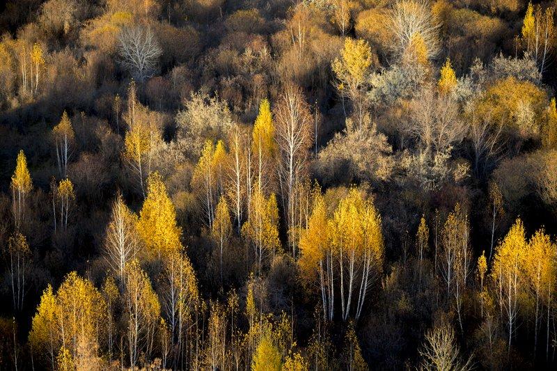 казахстан, река, каратал, прибалхашье, тугай, тугаи, тугайные леса, семиречье, Осень в Прибалхашьеphoto preview