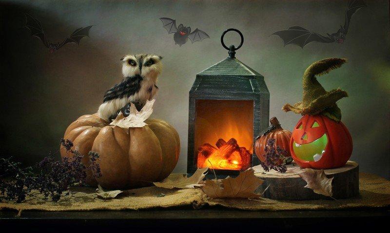 композиция, тыквы, осень, хэллоуин, коты, кошки. животные, фонарик, камелек Не страшные страшилки :)photo preview
