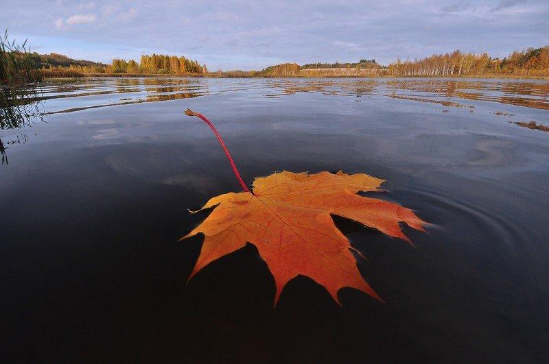 осень, природа, пейзаж, озеро, листья опавшие листья.photo preview