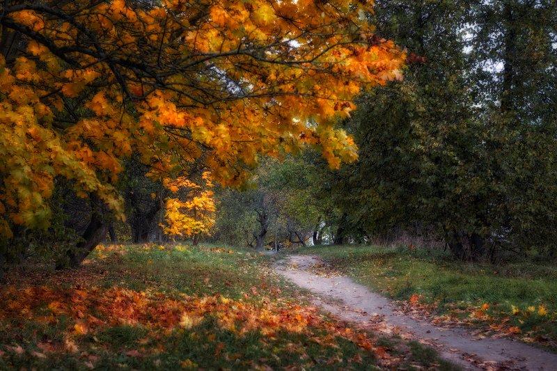 осень, дорога, деревья, гелиос 44 Осенний этюдphoto preview