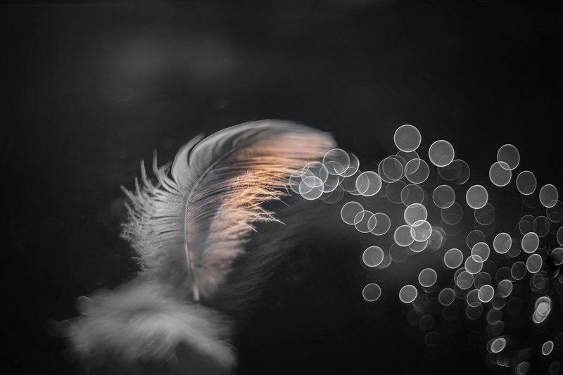 feather, close-up, reflection, meyer-optik görlitz trioplan 50 mm f/ 2.9 v, wind...photo preview