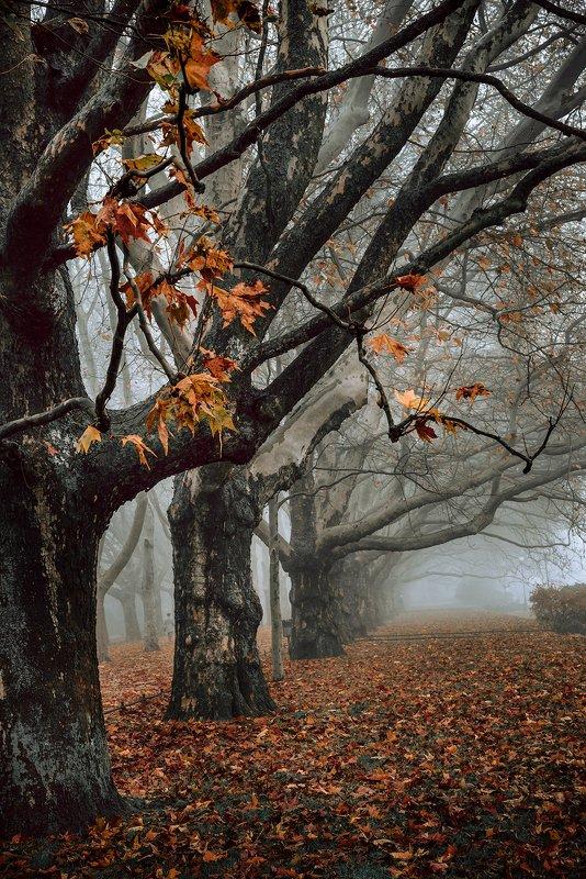 платаны autumn fall trees szczecin poland dranikowski magic mist foggy morning nature осень tree платаныphoto preview