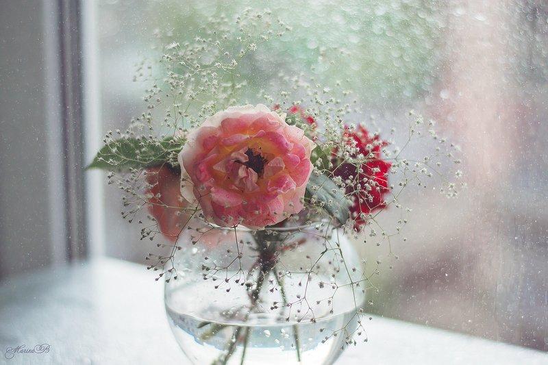 розы, капли, дождь Kiss of the rainphoto preview