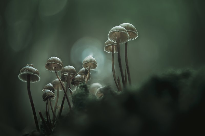 macro, forest , mushroom, autumn foggy morningphoto preview