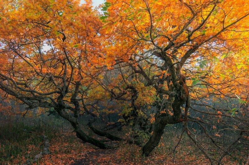 осень,ноябрь,деревья,горный лес,туман,природа,пейзаж Междумирье ноябряphoto preview