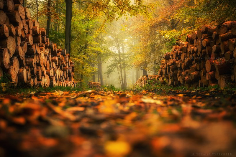 landscape, poland, light, entrance, tunnel, autumn, awesome, amazing, sunrise, sunset, lovely, nature, travel, morning, trees, wood, fog, mist, colors In the magic forestphoto preview