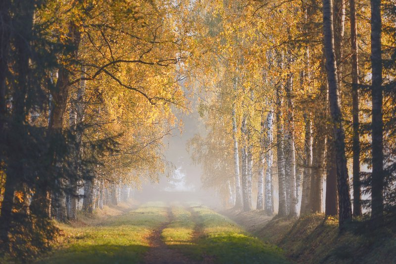 питер, павловский, павловскийпарк, осень, пейзаж В осень . . .photo preview