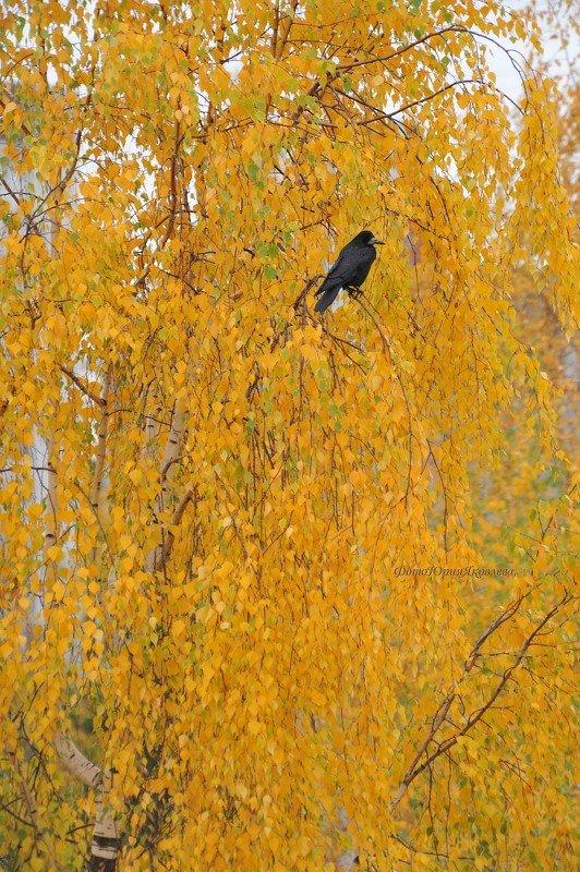 осень, природа, пейзаж, , листья,птицы,грач, В одиночестве.photo preview