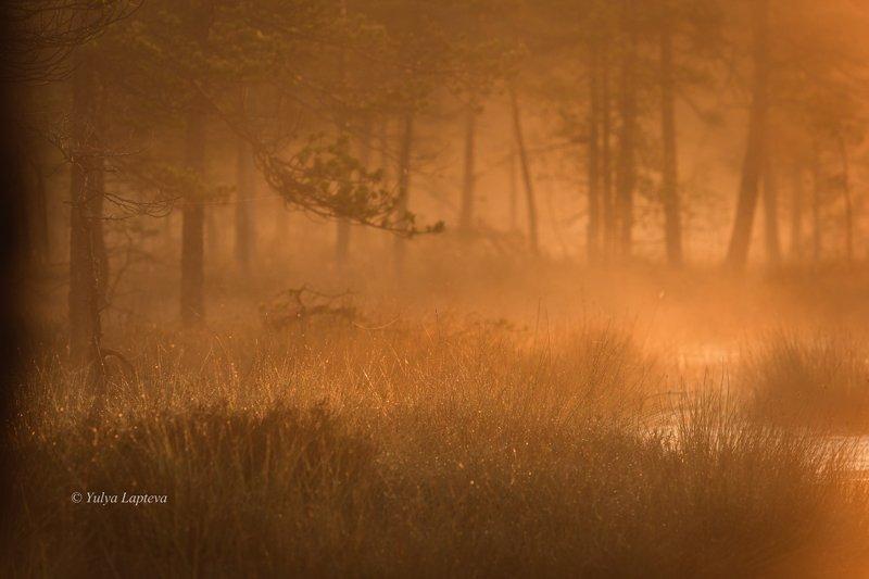 природа утро,болото,туман,рассвет,красота,россия \