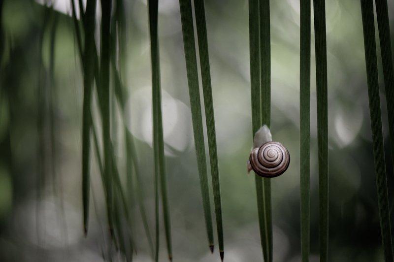 макро, улитка, природа, вчувствование, жить и дышать, nikon, nature, macro, snails, macro, true feelings, light of nature \