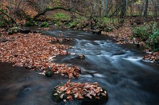 Autumn in river