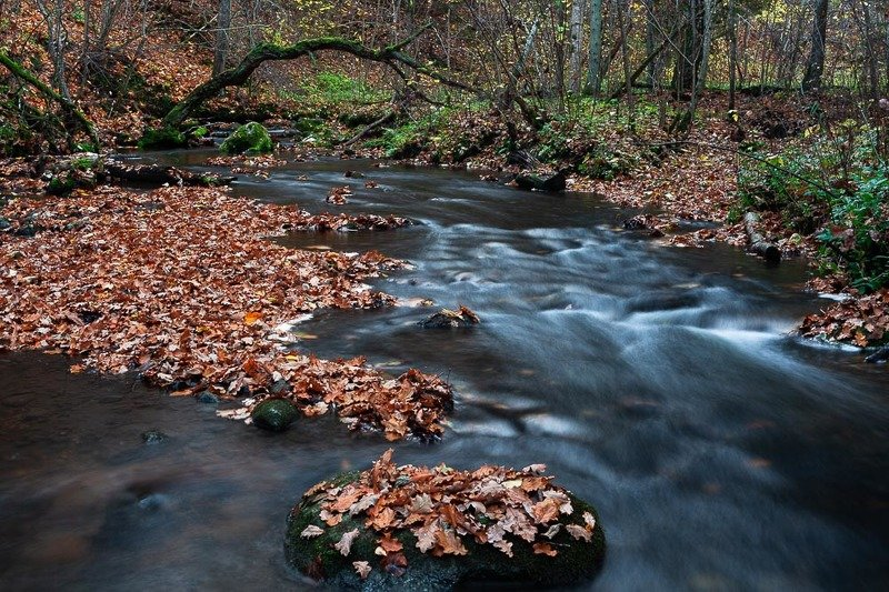 Autumn in riverphoto preview