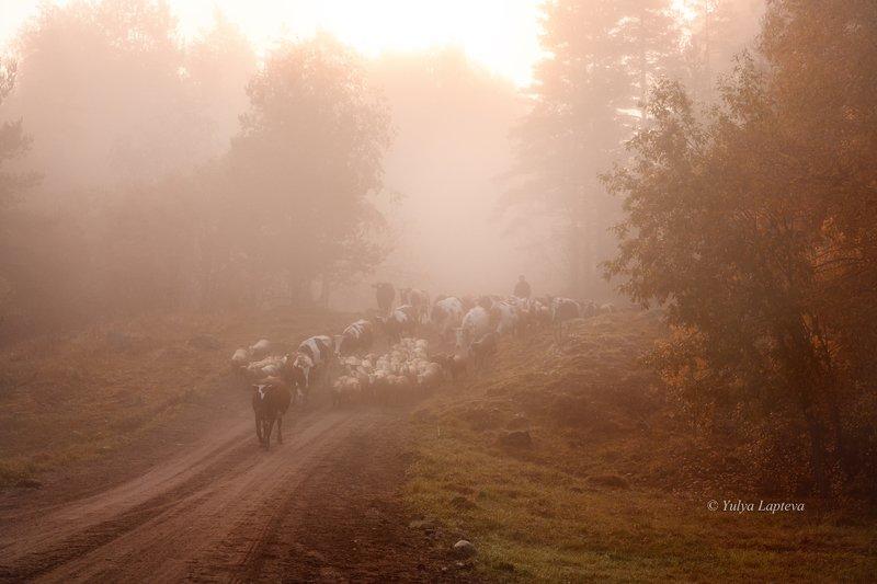 карелия,осень,туман,красота,рассвет,утро \