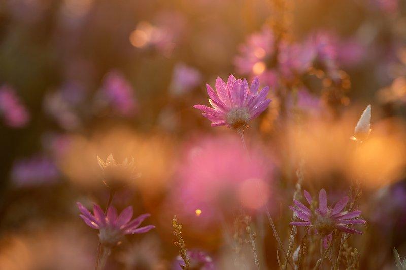 Сухоцветыphoto preview