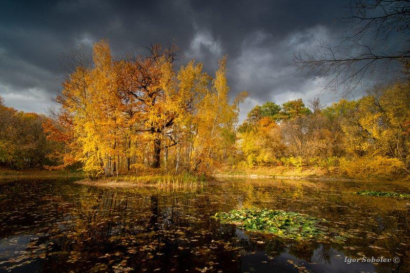 осень, сокольники, пейзаж, москва, озеро Осень в Сокольникахphoto preview