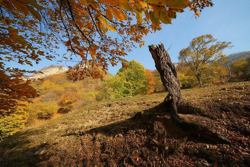 приэльбрусье, осень, деревья, горы Золотая осень в Приэльбрусьеphoto preview