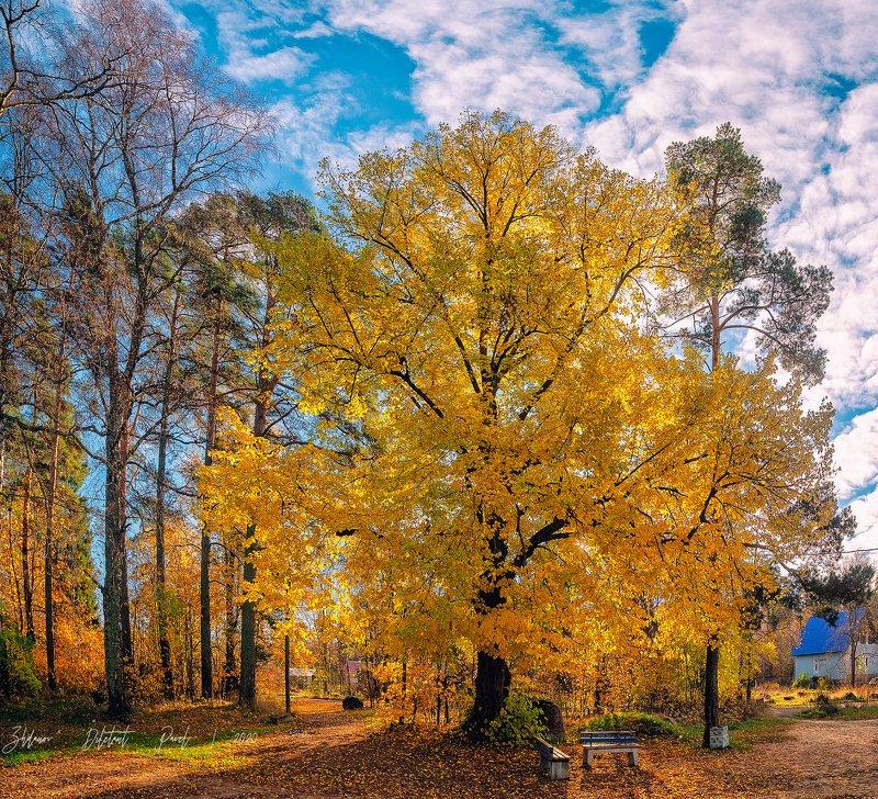 #Осень  #ПГТ Советский  #Ноябрь #цвет #Пейзаж Яркий ноябрь.photo preview