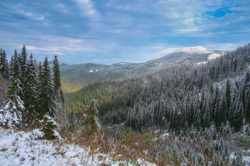#landscape #nature #scenery #forest #wood #autumn #mist #misty #fog #foggy #river #waterfall #longexposure #mountain #vitosha #bulgari #aтуман #лес #oсень Мармароський масивphoto preview