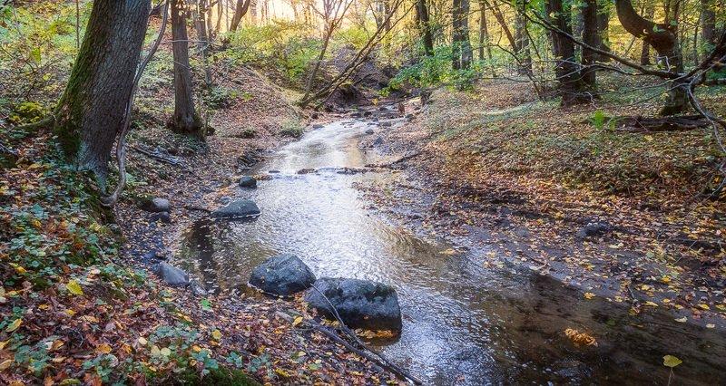 Осень у Чистой речкиphoto preview