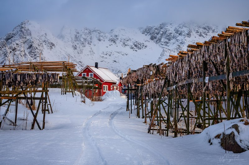 lofoten, norway, norge, winter, fish, red house Норвежские виды..photo preview